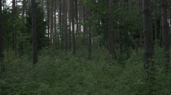 View around the green lush forest Stock Footage