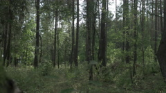 Tracking shot inside the green forest. FOR COLOUR GRADING Stock Footage