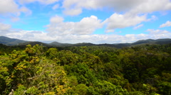 Aerial view of Rainforest in Queensland Australia - stock footage