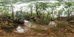VR360 Lush green rainforest virtual reality with nature audio sounds 360VR Stock Footage