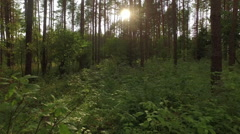 Fly through the green forest with sun rays through the tress Stock Footage