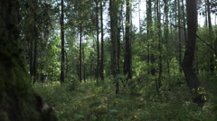 Slow motion tracking shot inside the green forest Stock Footage