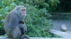 Monkey in the mountains with nice green for background Stock Footage