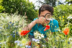 Boy looking at flower through magnifying glass - stock photo