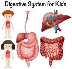 Digestive system for kids Stock Illustration