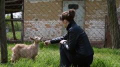 The woman feeds the goat. Stock Footage