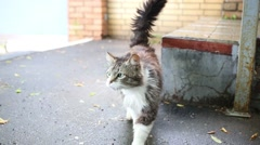 Disheveled yard gray and white cat on pavement near stairs. Stock Footage