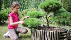 Girl sitting next to bonsai pine needles and touching her in park. Stock Footage