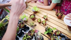 Children standing around table with small pots Venus flytrap and seller Stock Footage