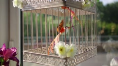 Artificial small bird in cage decorated with flowers close up. Stock Footage