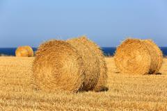 Hay rolls on meadow in summer - stock photo