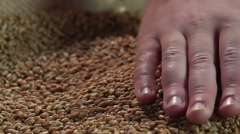 Male farmer's hand enjoying touch of collected crop wheat, agriculture, business Stock Footage