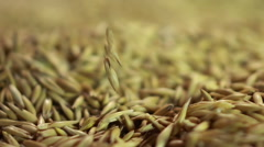 Human hand taking pinch of oat seeds and demonstrating to buyer, agriculture Stock Footage