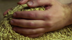 Value of grain, man taking oat seeds in palms, enjoying quality, agriculture Stock Footage