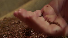 Farmer man holding in hands flax seeds and checking quality, agriculture Stock Footage