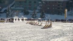 St Moritz grand prix horse trotting - stock footage