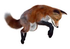 3D Rendering Red Fox on White Piirros