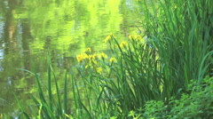 Garden of the Impressionists Stock Footage
