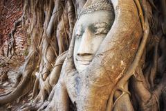Buddha Head in the Tree Trunk, Ayutthaya Historical Park, Thailand Stock Photos