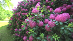 Rhododendron Park - stock footage