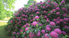 Rhododendron Park Stock Footage