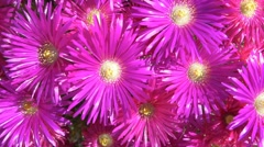 Flowers purple color petals detail 4k detail texture spring clear focus colorful Stock Footage