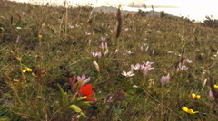 Gliding over paramo vegetation with gentians and other flowers high in the Andes Stock Footage