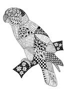 Original zentangles drawing of a parrot. - stock illustration