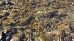 Shallow river flowing over algae covered rocks Stock Footage
