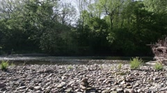 River flowing to right of screen by forest bank Stock Footage