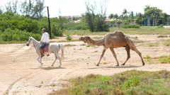 Camel Towed Stock Footage