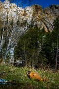 Mt Rushmore Marmot - stock photo