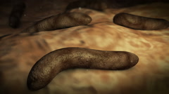 Parasitic worms inside human body. Stock Footage