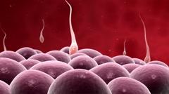Microscopic visualization of fertilization. Stock Footage