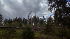4k Sun and clouds timelapse wild mountain range Harz forest wide angle Stock Footage