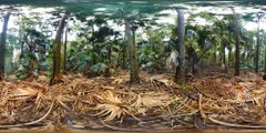 360VR Cabbage tree palm grotto rainforest landscape virtual reality VR Stock Footage