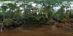 360VR Eastern Australian temperate rain forests running water sounds Stock Footage