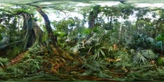 360VR Giant fig tree in lush green rainforest virtual reality nature - stock footage