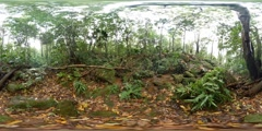 360VR Ancient old growth forest of Gondwana rain forest landscape Stock Footage