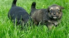 Mongrel puppies closeup Stock Footage