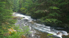 River running in the forest between firs - stock footage