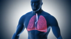 Zoom into human lungs exposing a detailed view of the alveoli. Stock Footage