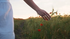 Feminine hand touching flowers in poppy field - stock footage