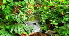 4K Lush Green Forest Jungle and Stream, Natural Tropical Beauty Stock Footage