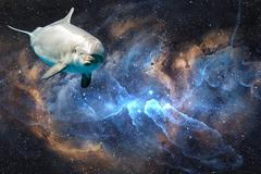 Fantasy Dolphin in fantasy (no nasa) space universe background looking at you - stock photo