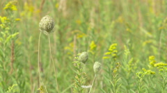 Weed swept by a summer breeze Stock Footage