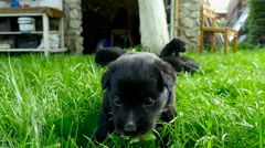 Mongrel puppy closeup Stock Footage