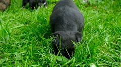 Mongrel puppy closeup Stock Footage