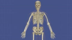 Animation of human organs protected by the skeletal system. Stock Footage