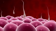 Microscopic visualization of sperm releasing nucleus. Stock Footage